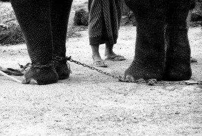 Come addestrare un elefante
