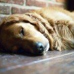 6 cose da fare la sera per svegliarsi in maniera positiva